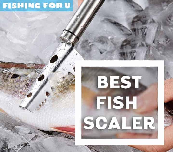 10 Best Fish Scaler