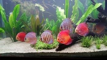 Saltwater Fish For 55 Gallon Tank
